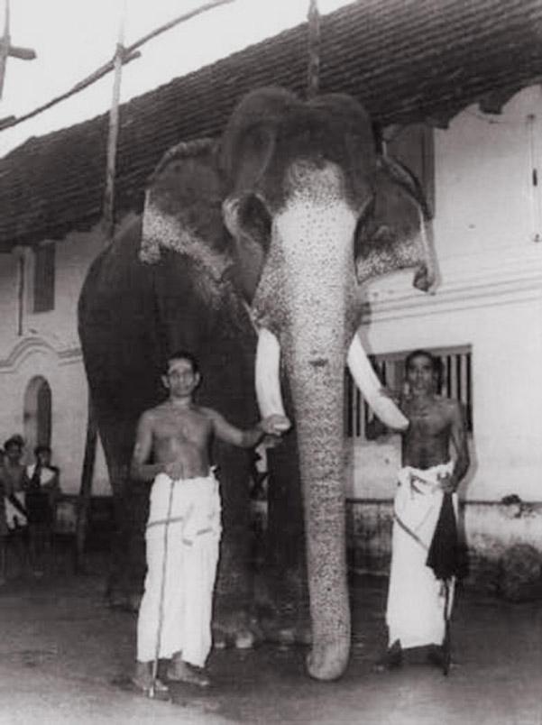 Veliki posvećenik u telu slona – Guruvajur Kesavan