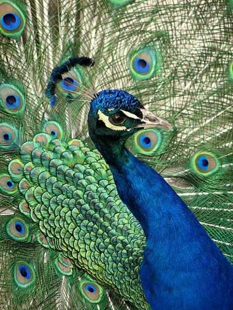 Priroda nije umorna od svojih stvorenja. Kako možemo mi...?