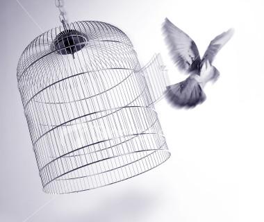 Oslobodjenje. Liberation