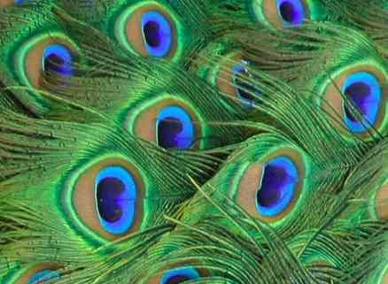 Veliki Učitelji, hiljadama očiju, gledaju napredak svake duše… Bezuslovna ljubav je izraz.