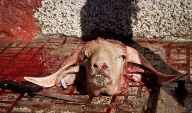 Agonije i boli čovečanstva nose teret naših zločina prema drugim vrstama. Moramo toga biti svesni.