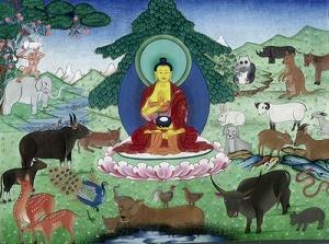 01 buddhas love for animals