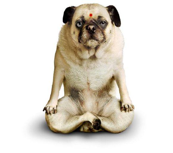 yogabrashta