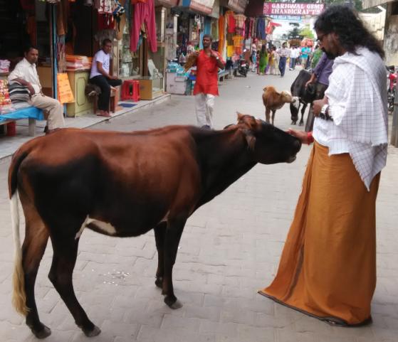 pkmohan-mohanji-atmananda-mohanji-feeding-a-cow-in-rishikesh1