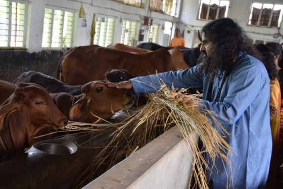pkmohan-mohanji-atmananda-mohanji-with-cows