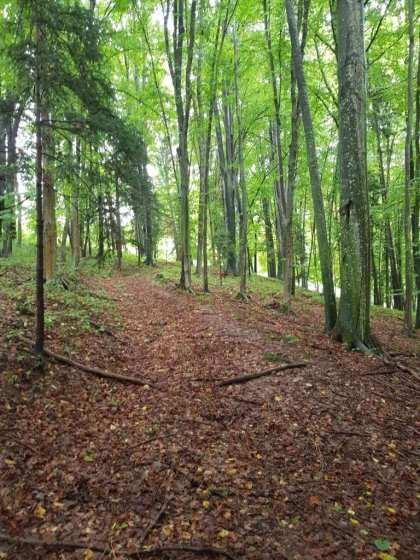 slovenia-ashram-land-4